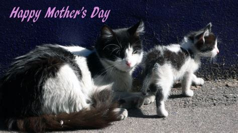 Last-Minute Mother's Day Ideas for Cat Lovers - Catster
